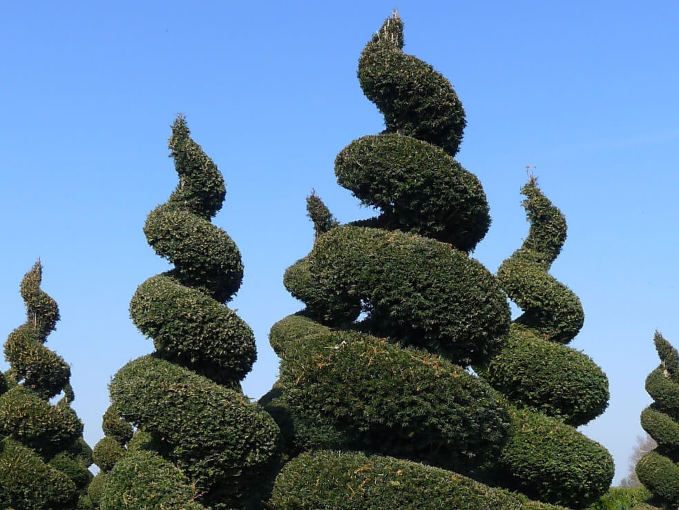 ja-jones-shaped-trees.JPG